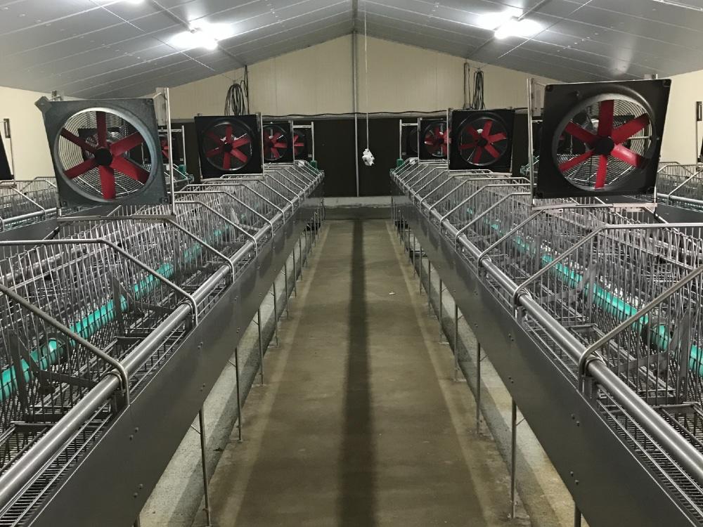 Batiment élevage lapin pour production cunicole - Entreprise Dugué