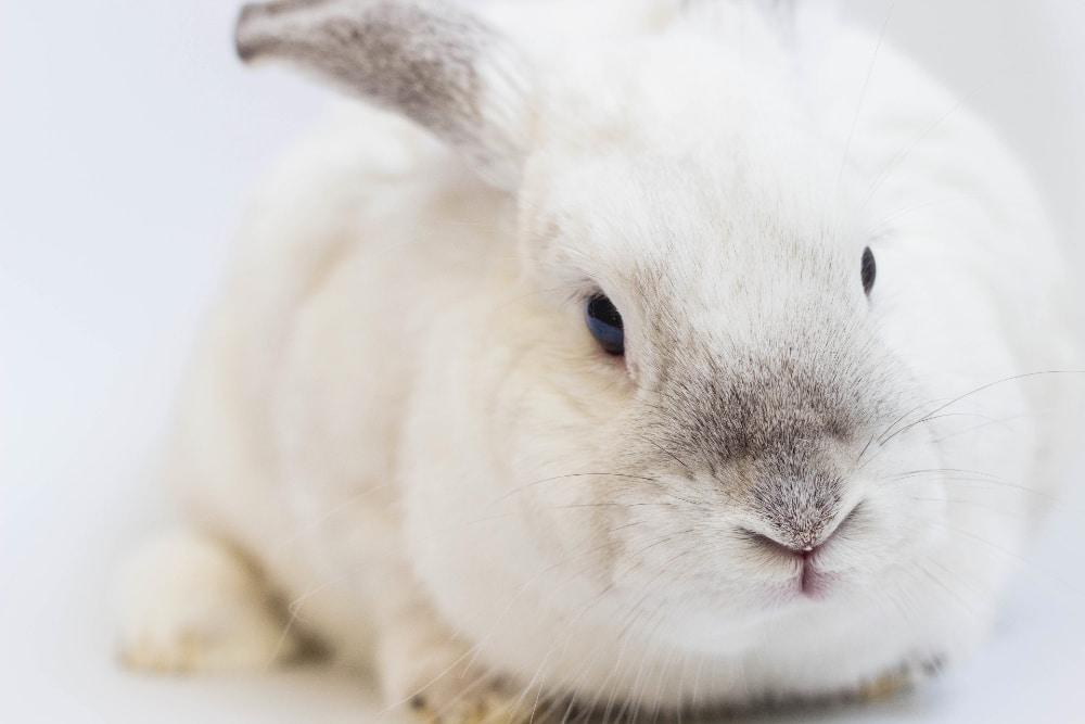 Batiment élevage lapin pour cuniculture - Entreprise Dugué